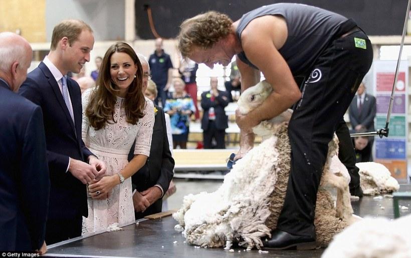Kate-mouton