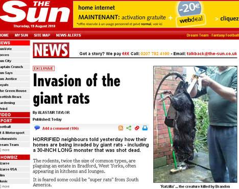rats-geants