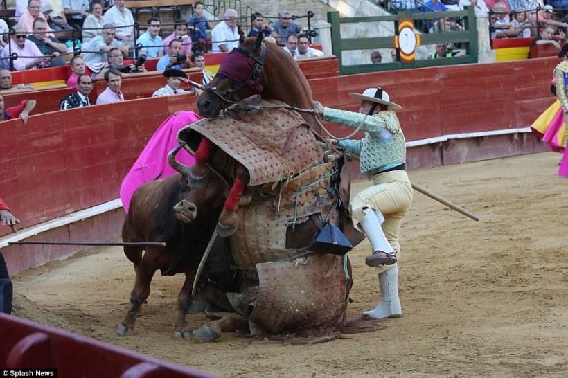 toro-cheval2b