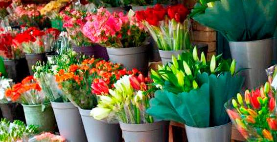 monceau-fleurs