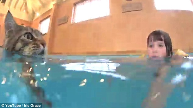 iris-chat-piscine