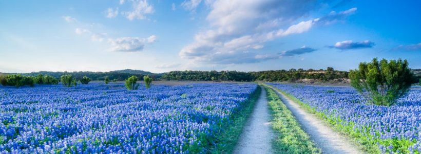 cropped-walking-in-a-bluebonnet-field-texas2.jpg