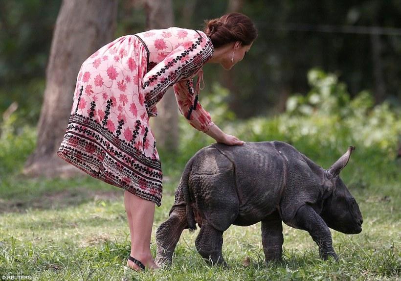 kate-rhino2