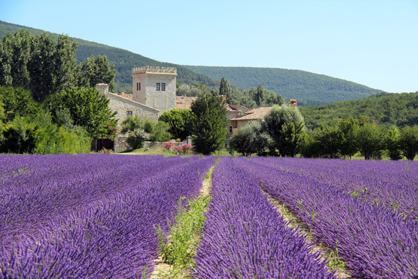 Lifestyle A Journey In Drome Lavender L Effet Colibri The