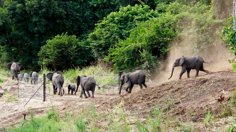 harry-elephants