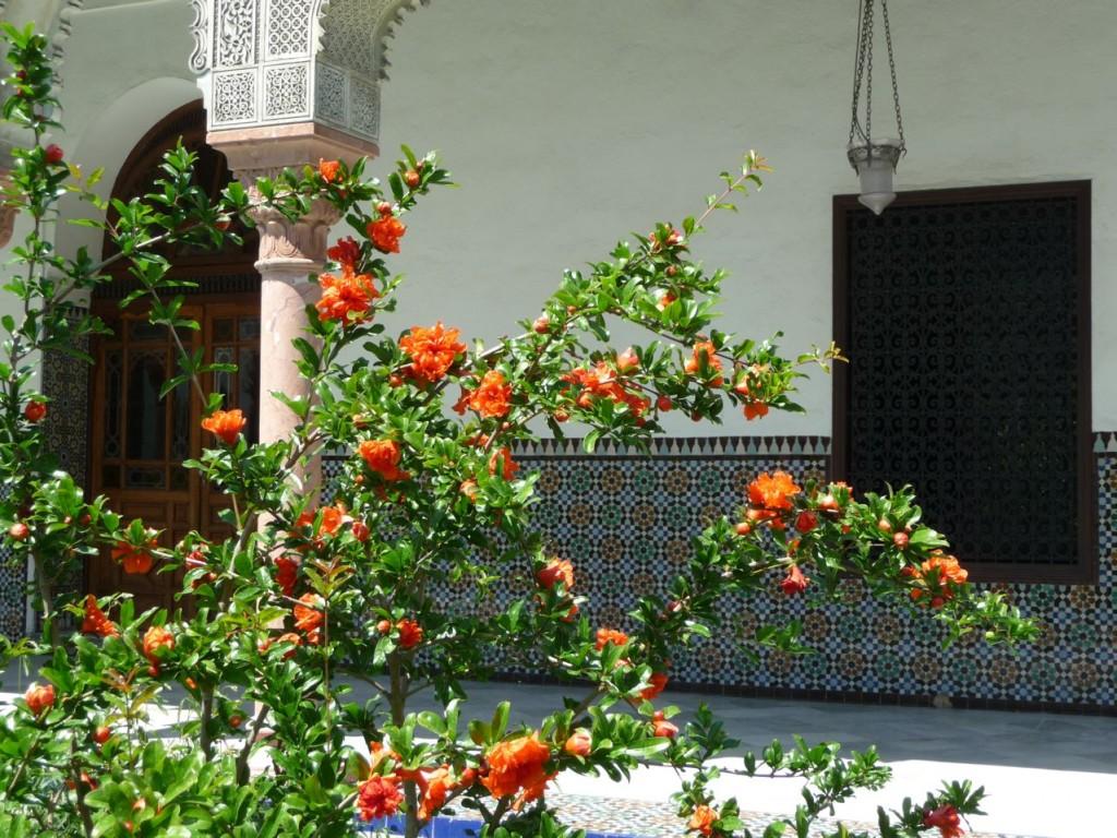 jardin expo jardins d orient l institut du monde arabe l 39 effet colibri the hummingbird effect. Black Bedroom Furniture Sets. Home Design Ideas