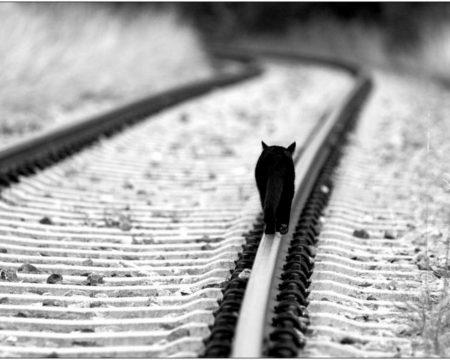 lonely-kitten