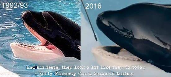 orque-maltraitance